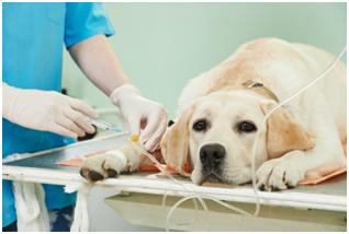 Энтеропатии с потерей белка у собак